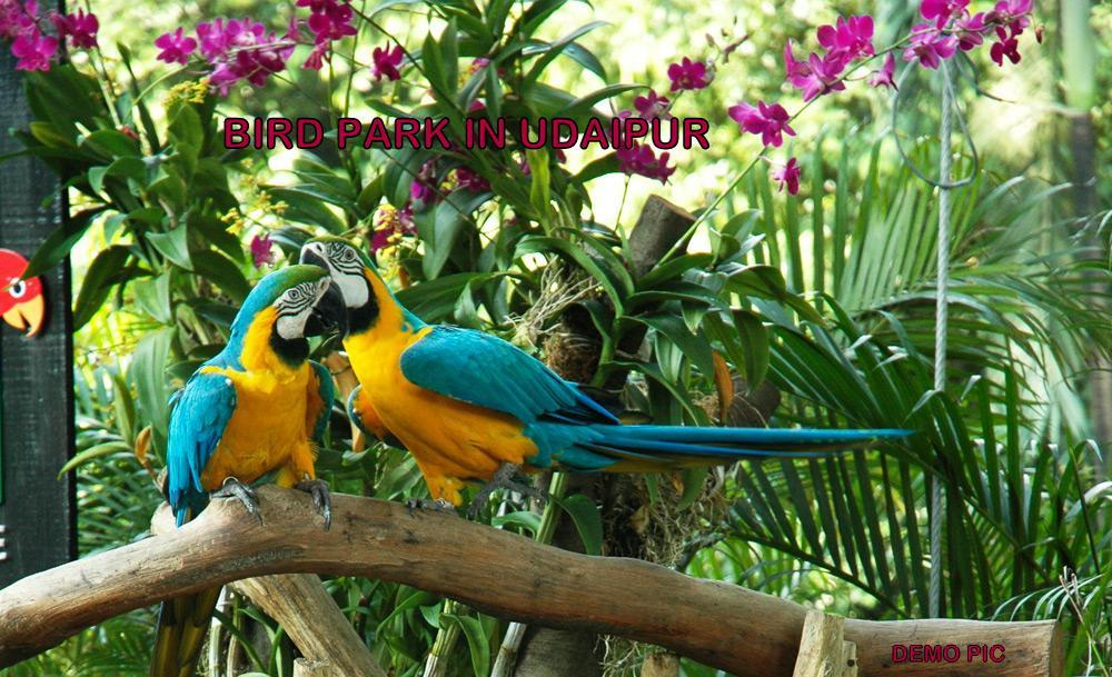 Bird Park in Gulab Bagh from next month