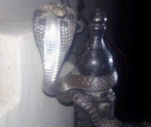 घर के मेन गेट पर आकर बैठा कोबरा