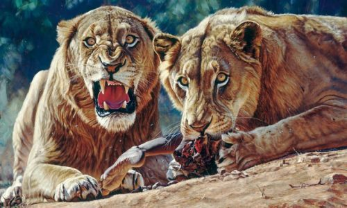 Let's talk-What makes a man-eater?