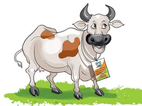 Now, Aadhar Card for Cows!!