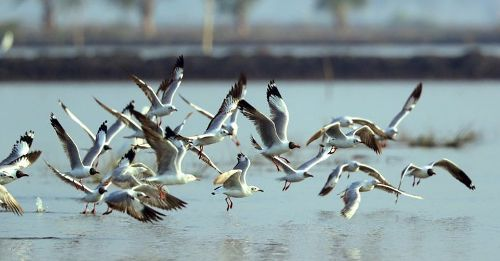 Environment and bird conservation programmes throughout the year