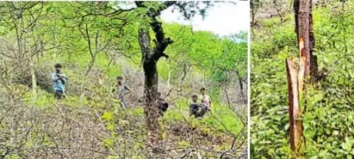 Deforestation for hotel near Amrakhji temple