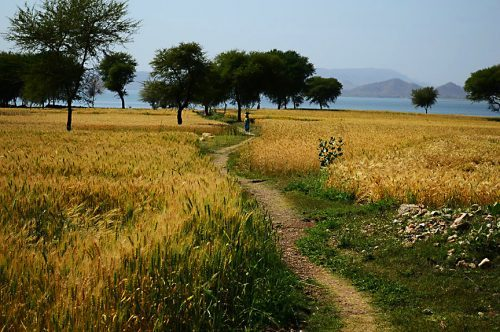 Udaipur's Gati Gaum Becomes Rajasthan's First Internationally Certified Organic Village