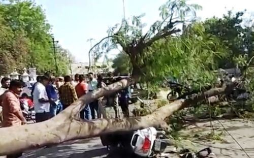 Man killed as trees falls on him outside Meera Girls college
