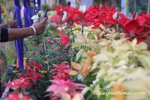 Flower Show at Fatehsagar Paal