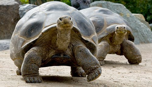 FIR lodged against Udaipur temple for illegally keeping Tortoise