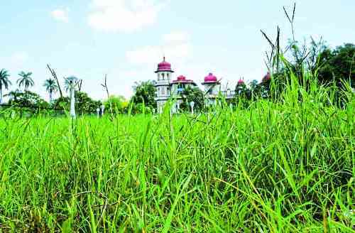 Gulab Bagh faces neglect post monsoon