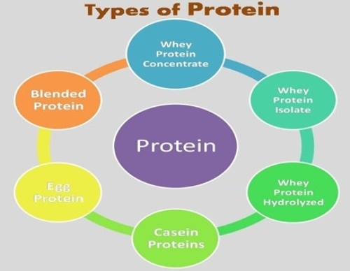 Everything You Need To Know About The Types of Protein