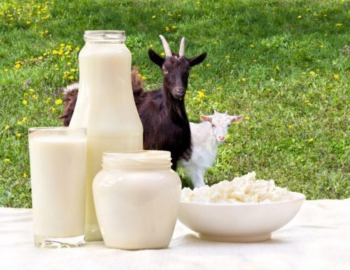 Flavoured goat milk to be available from 1st April