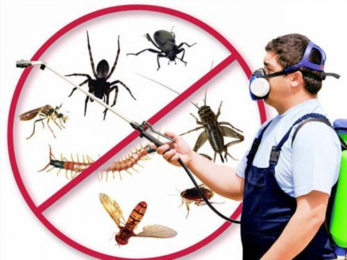 Residential Pest Control – Precautions, Side Effects, Advice, and Solution